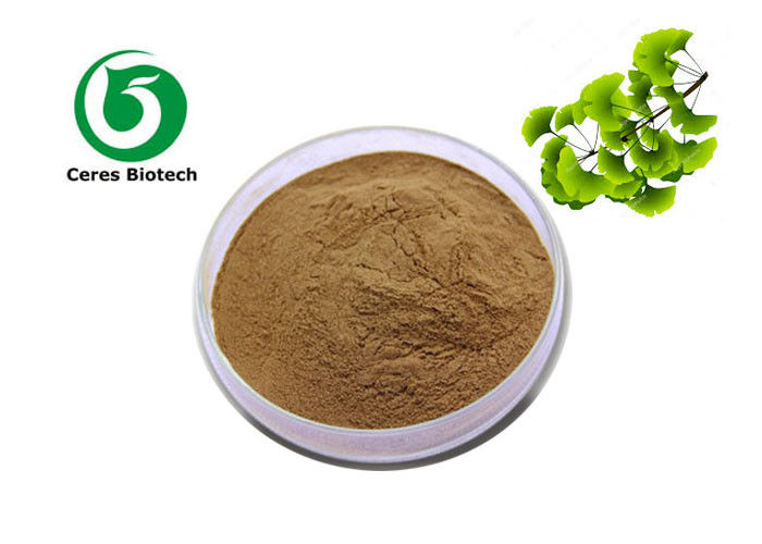 24 Flavone 6 Lactones Ginkgo Biloba Extract Powder Traditional Chinese Medicine Ethanol Extraction